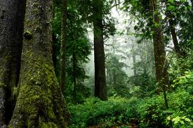 Az erdő fontossága az élővilág számára
