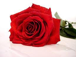 Romantikus ajándékok